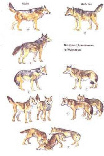 lecken hund bedeutung lesben bilder